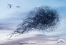 Swarm Theory / Things that group together to accomplish what one can't.