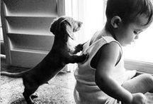 {Weiner dogs}