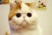 :: Here Kitty Kitty :: / by Laura Jardine
