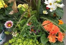 Container Garden / Get inspiration and learn How to create your own container gardens with Stauffers of Kissel Hill Garden Centers. http://www.skh.com / by Stauffers of Kissel Hill