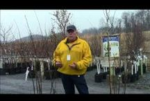 Gardening How To Videos / Stauffers Garden Team shares how to tips and do-it-yourself ideas in these videos. / by Stauffers of Kissel Hill