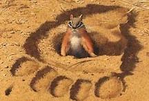 Bev Doolittle Wildlife Art