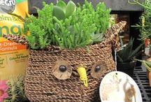 Succulents / Many people have put off buying cacti and succulents believing that they are difficult to care for. Actually, just the opposite is true. Most are very hardy and, unlike many other houseplants, thrive on abuse! Many of these plants require minimal care and, by following just a few simple guidelines, will do well in most homes.   Learn more about succulents at Stauffers of Kissel Hill Home & Garden website: (http://www.skh.com/home-garden/) / by Stauffers of Kissel Hill
