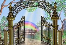 "Rainbow Bridge /  Can u please keep this board in memory of our fur babies... This is not a board for abuse, this is a memorial and Rainbow Bridge Board. There is a visit button now!!!  Welcome all! Please feel free to post and read all our beautiful memorials. This site gives us all a place to visit...""A place where our pets go to frolic pain free, and to play into ETERNITY"" Please share all of your memories!!!!!! Please DO not double  post... Please keep our beautiful board on topic!!!"