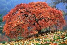 Fall / Love everything to do with Autumn. Gorgeous trees, cool nights and comforting food.  / by Kellie@SouthernSashay