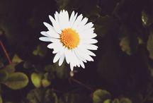 Una foto al giorno 2015 / Con gli occhi del cuore