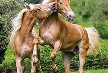 Horses / by Terri Day