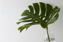 Plants & Flowers. / Bringing nature indoors.