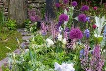 In My Garden / by Kelly R. Klug
