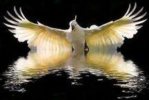 Birds / Beautiful birds of the world / by Terri Day
