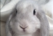 Bunnies are the best!