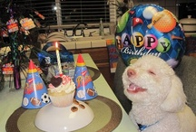 Dogs Birthday Party / by Marie Herbert