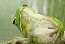 Frogs, Reptiles and Turtles / by Nancy Grimes