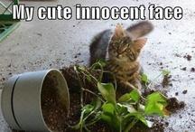 Innocent Until Proven Guilty... / by Marie Herbert