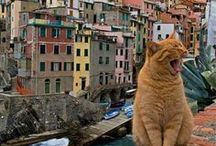 Cats On Location / All over the world...
