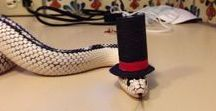 Snakes in Hats! / I like snakes, seriously. These crack me up every time!