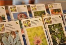 Mijn Zadenbib & Seed libraries / Alles over Mijn Zadenbib & Everything you always wanted to know about public seed libraries worldwide!