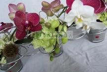 Portfolio Bruidsbloemen (wedding flowers) / Hier is een klein overzicht te zien van bruidsboeketten, corsages, autoversiering en overige bruidsbloemen gemaakt door Bloematelier Rolinda uit Barneveld
