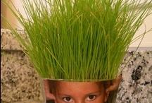 Kind & Tuin / Leuke en leerzame tuinactiviteiten voor kinderen, inspiratie voor de schooltuin, alles over de bloemetjes en de bijtjes,...