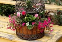 Gardening Ideas / Gardening Ideas: Outdoor Gardening Ideas, Tips, Garden Decor and Inspiration for Outdoors on Pinterest. / by DIY BOARDS