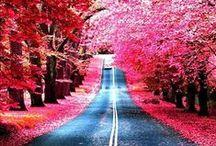 Roads / by MK Hill