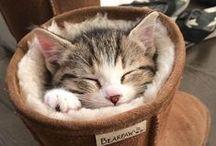 Kitty Cats / I Love Cats!