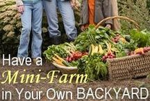 How to Start a Garden / How to Start a Garden - How to Grow your own Food - Fruit & Vegetable Gardening Information & Tips on Pinterest.