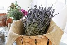 DIY Lavender Crafts / DIY Lavender Crafts - All Things Lavender - How to Grow, Dry & Create All Things with Lavender.