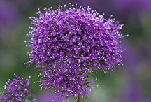 Purple / by MK Hill