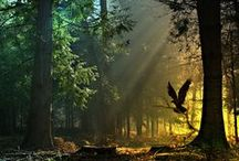 Forest Enchantment / Forest Enchantment: Enchanting Forest Scenes & Trees in Nature Photography. / by DIY BOARDS
