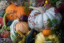 Fall / Thanksgiving / by Suzanne Wheeler