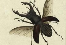 Beetlebum / by Threedeer