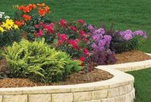 DIY Curb Appeal / DIY Curb Appeal & Landscaping  / by DIY BOARDS