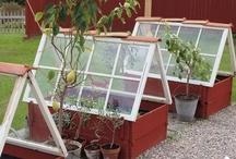DIY Greenhouse / DIY Greenhouse