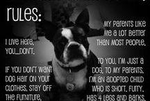 Gone to the dogs / by Kerrie Lynn Miller-McKinnon