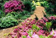 DIY Gardening Ideas / Flower Bed Ideas, Gardening Tutorials and DIY Garden Ideas, Tips and Info For Growing Flower Beds. (Many Drought Tolerant, Especially for Texas)