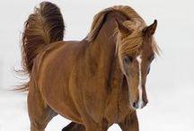 HORSES!!!!!!!