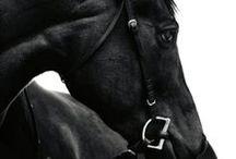 E Q U E S T R I A N / Horses and riding