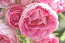 Natura e fiori - Flowers