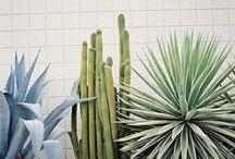 C A C T U S  / cactus, style inspiration.