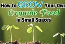 Growing your own food! / There is no act more gratifying, more basic, more liberating, than to coax food from the Earth. Time and the rhythms of nature become the ultimate template by which to live. Do it just to know that you can do it, or do it just to live or do it to save money.  You want to talk about a truly useful skill-set?