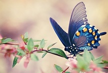 Beautiful Butterflies / by Cindy Coan