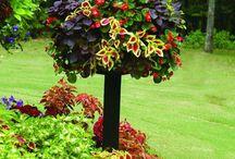 Gardens / by Petronella Barnes