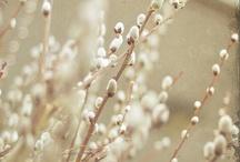 Spring / by Essi Esmeralda