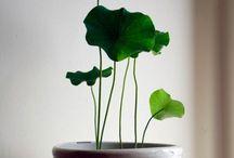plantas / by eFFe ▪️Karatt