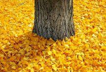 to autumn / autumn love