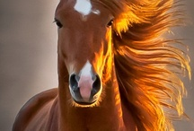 Horse'in Around / by Susan Knowlton