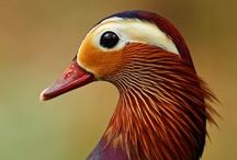 Ocells..( Birds..) / by Olga Turú