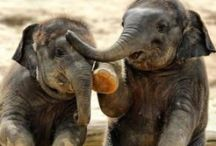 Elephants / The beauty in these beautiful beasts are just amazingly beautiful to me!!