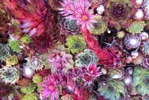 My Succulent Garden / by Leah Bergman / Freutcake
